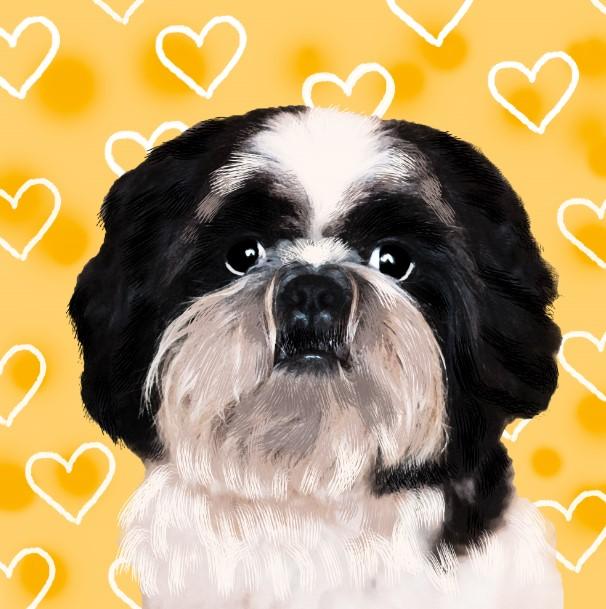 sesion fotografica de perro en cdmx