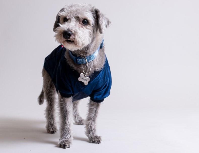 sesion de fotos para perros
